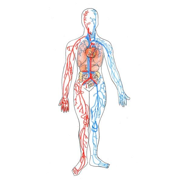 òrgans i aparells